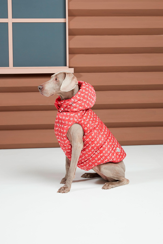 moncler genius ha anche una linea per cani i D