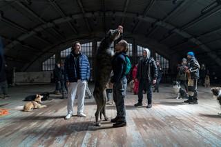 romeo-elvis-malade-straussphere-behind-the-scenes-honden-oekraine