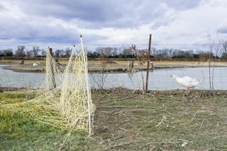 1551180412474-02-Ferme-de-Bernard-Reveil-dun-canard-au-bord-du-lac-artificiel-fait-par-B