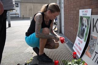 Eine Frau zündet eine Kerze vor einem Bild des Kampfhundes Chico an