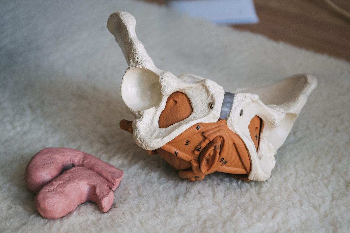 Ein Modellbecken und ein Uterus