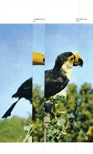 1551369847761-Toucan-Hiccup-300_300