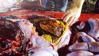 Dead whale with trash in its stomach.