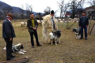Romanian-Carpathian-Shepherd-Bucova_WWF-Romania-34
