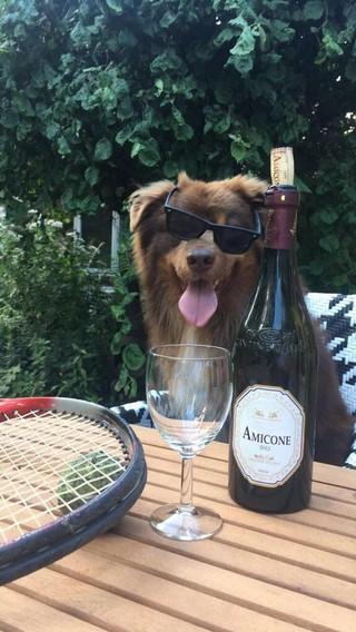 hond met zonnebril en fles rode wijn