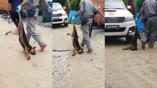 dog malaysia