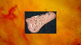 1555586268992-ecstasy_pille_orange-cornetto
