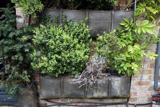 1556723319378-Back-Garden-Wall-Hanging-Plants1