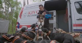 Beste sledehondenracers van Europa