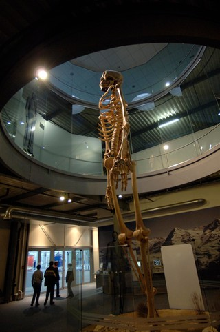 A giant model of a human skeleton in a museum space
