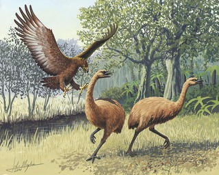 Illustration of two moa.