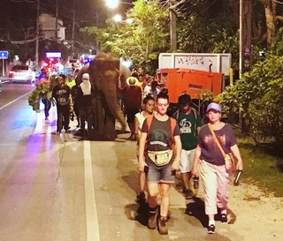 tourists join walk to freedom of elephants