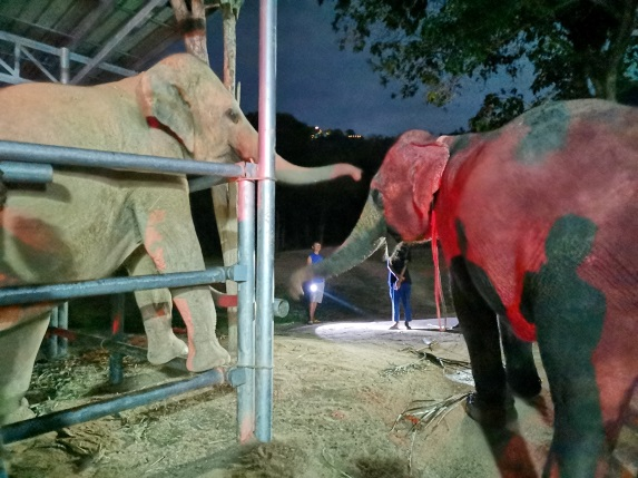 mother and daughter elephant reunited