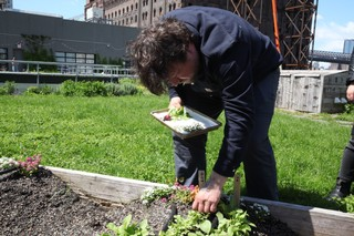 chef erik anderson of coi picking radishes on the munchies rooftop garden