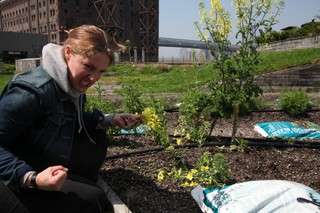 abra berens, chef at granor farm and author of the book ruffage, at the munchies roof garden to pick flowers and herbs