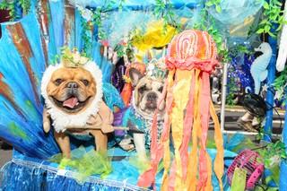 mermaid dogs