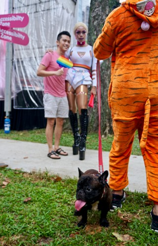 lgbt dog pride cute