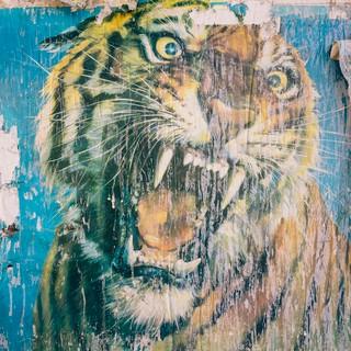 1562233125931-tigerfotografia_piero_percoco_estate