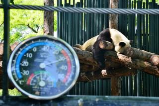 1562618899890-heat-panda