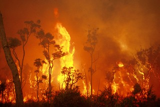 1562770862478-CSIRO_ScienceImage_439_Experimental_Bushland_Burning_Results