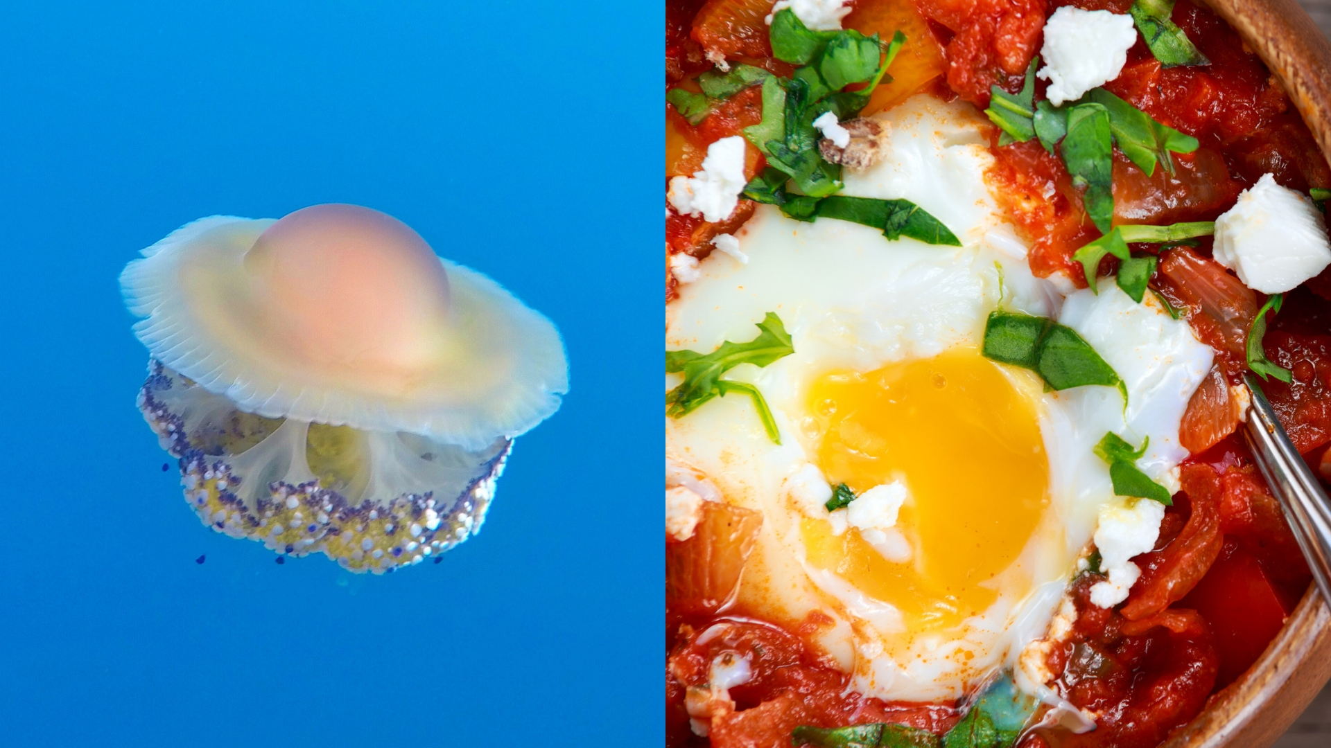 a fried egg jellyfish next to a sunny side up egg in tomato sauce