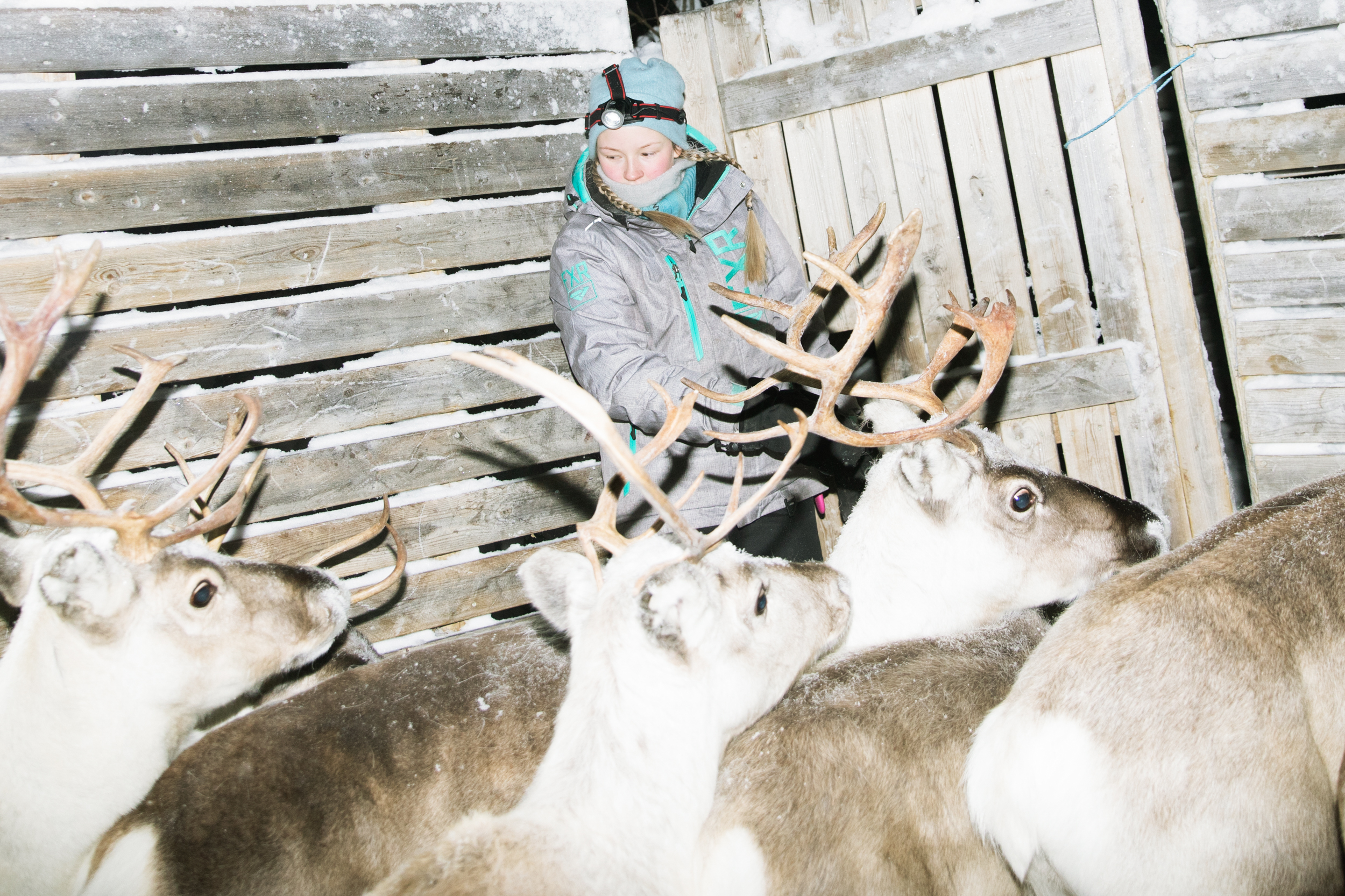 Inside the Snowy World of Scandinavia's Enduring Indigenous Culture