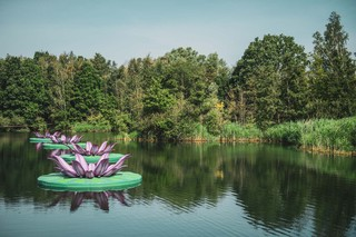 tomorrowland-festival-boom-water-waterlelies