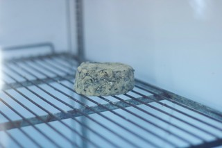 artist-making-mould-into-cheese