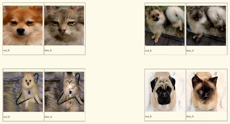 Ай превращает собак в кошек