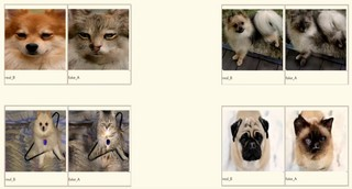 Ai turns dogs into cats