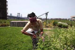 chef kia damon picking herbs on the munchies rooftop garden