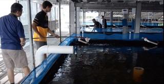 vertical fish farm singapore