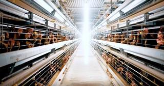 singapore egg farm