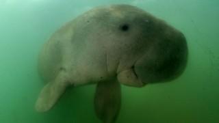1566109774253-skynews-dugong-thailand_4747809