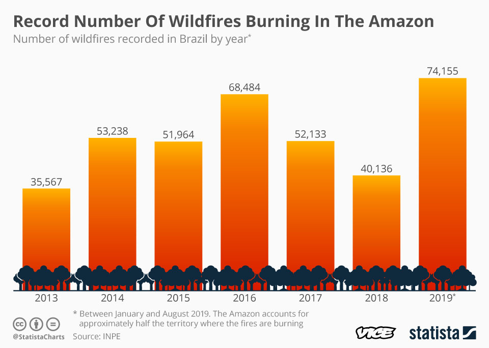 Feeling Sad About the Amazon Fires? Stop Eating Meat