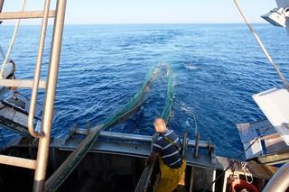 Pesca a strascico adriatico