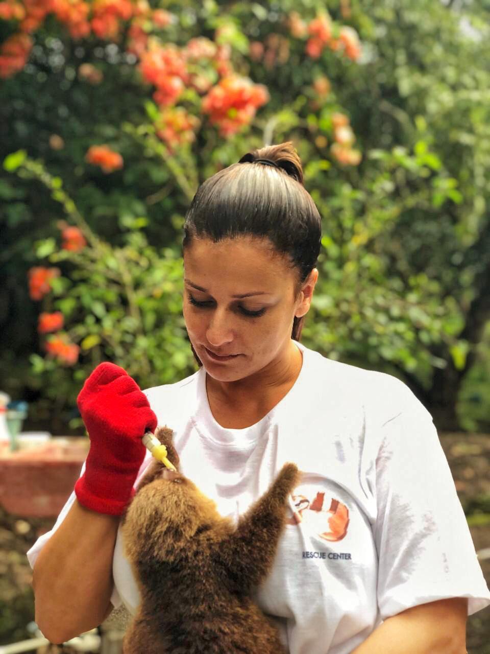 Animal Rescue Costa Rica co-owner Vanessa Lizano feeding a sloth