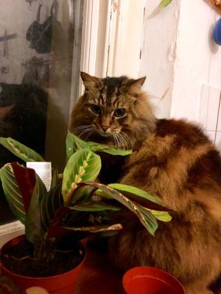 cat-fitness-tracker-fitbit