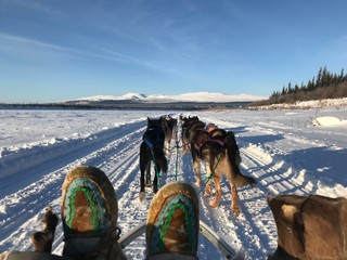 Dog-mushing in more temperate weather. Photo by Paul Josie