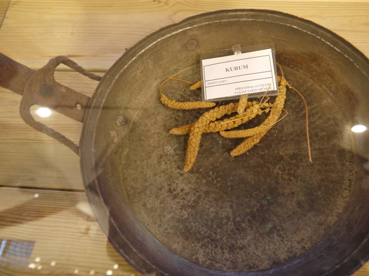 bowl with kurum plant