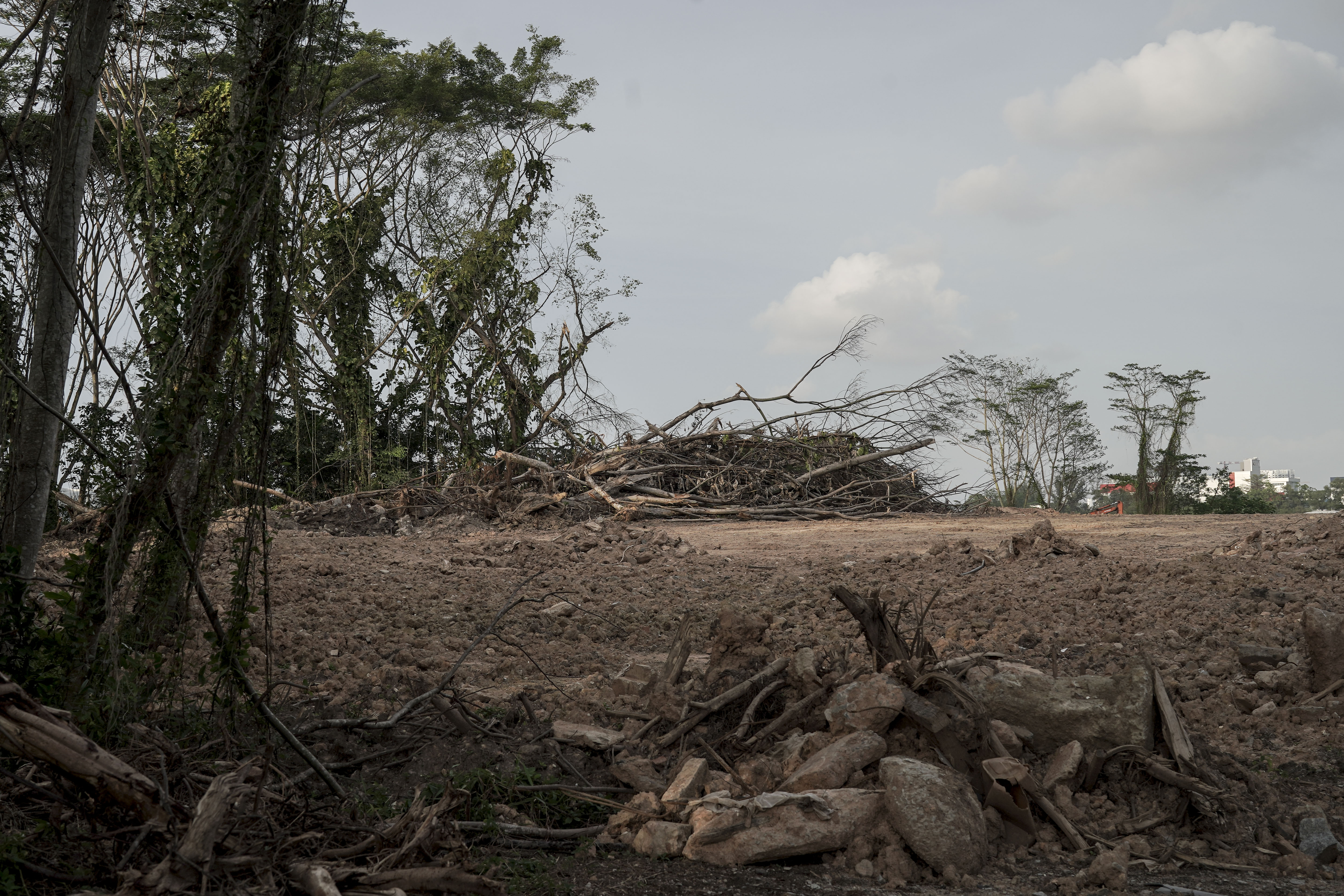 The destroyed forest.