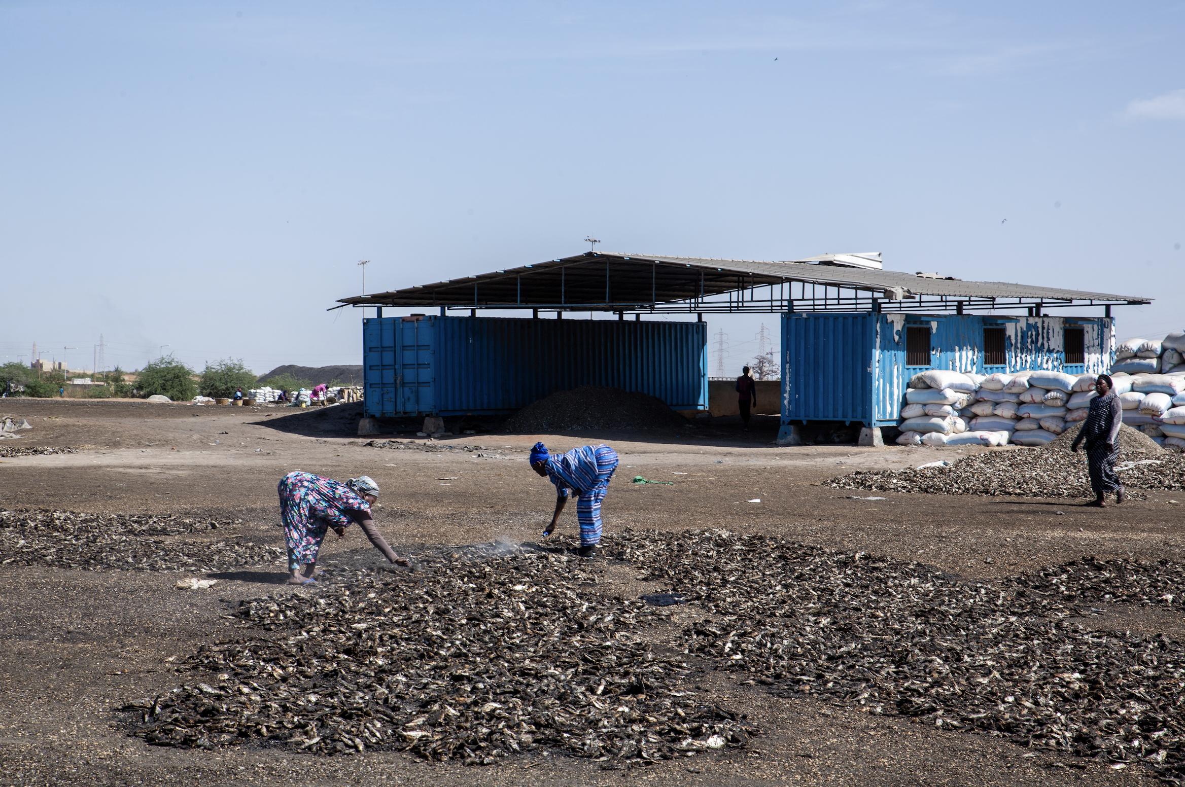 Piles of drying fish in Bargny, Senegal
