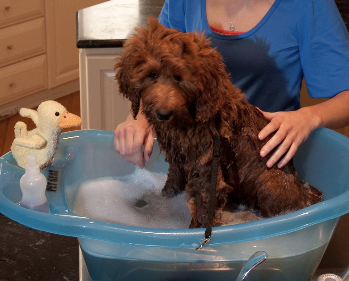 dog bath.png