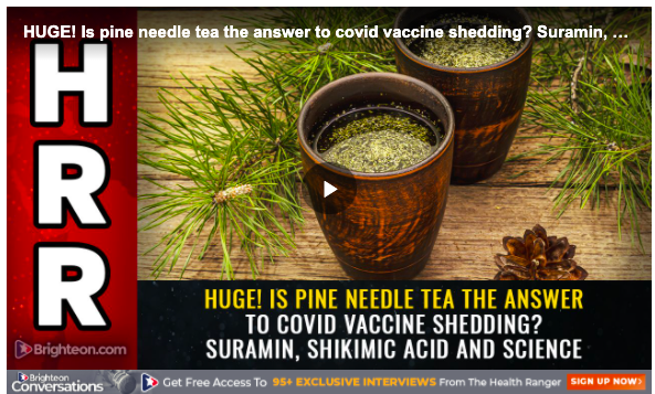 """Image shows two cups of pine needle tea and the words """"Huge! Is pine needle tea the answer to COVID vaccine shedding?"""""""
