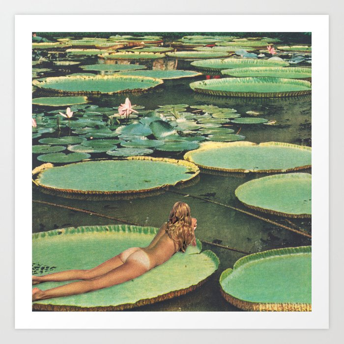 lily pond.jpeg