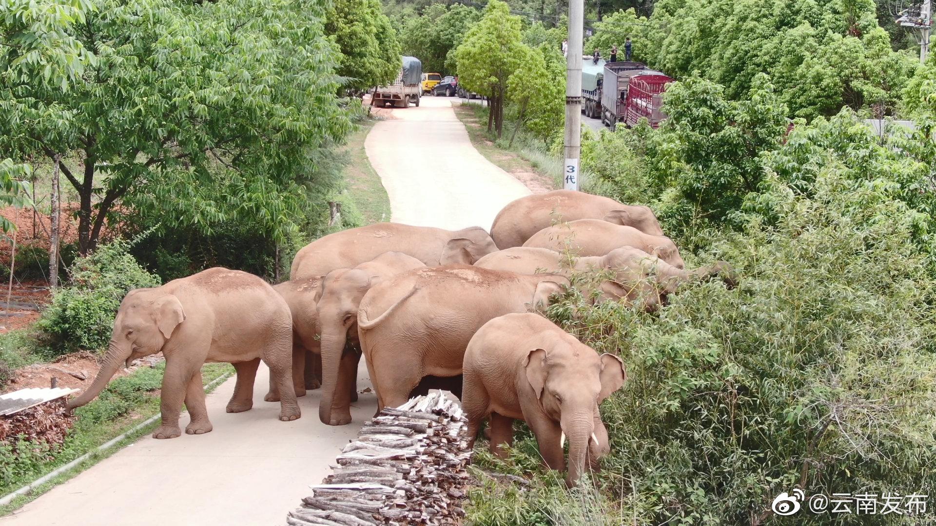 elephants3.jpeg