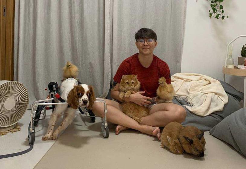 Gloria Sharp dengan dua ekor ayam Silkie, seekor anjing dan kucing, dan dua ekor kelinci.