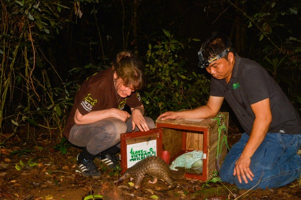 THAI VAN NGUYEN LEADS THE RELEASE OF RESCUED PANGOLINS BACK INTO THE WILD. PHOTO COURTESY OF SAVE VIETNAM'S WILDLIFE