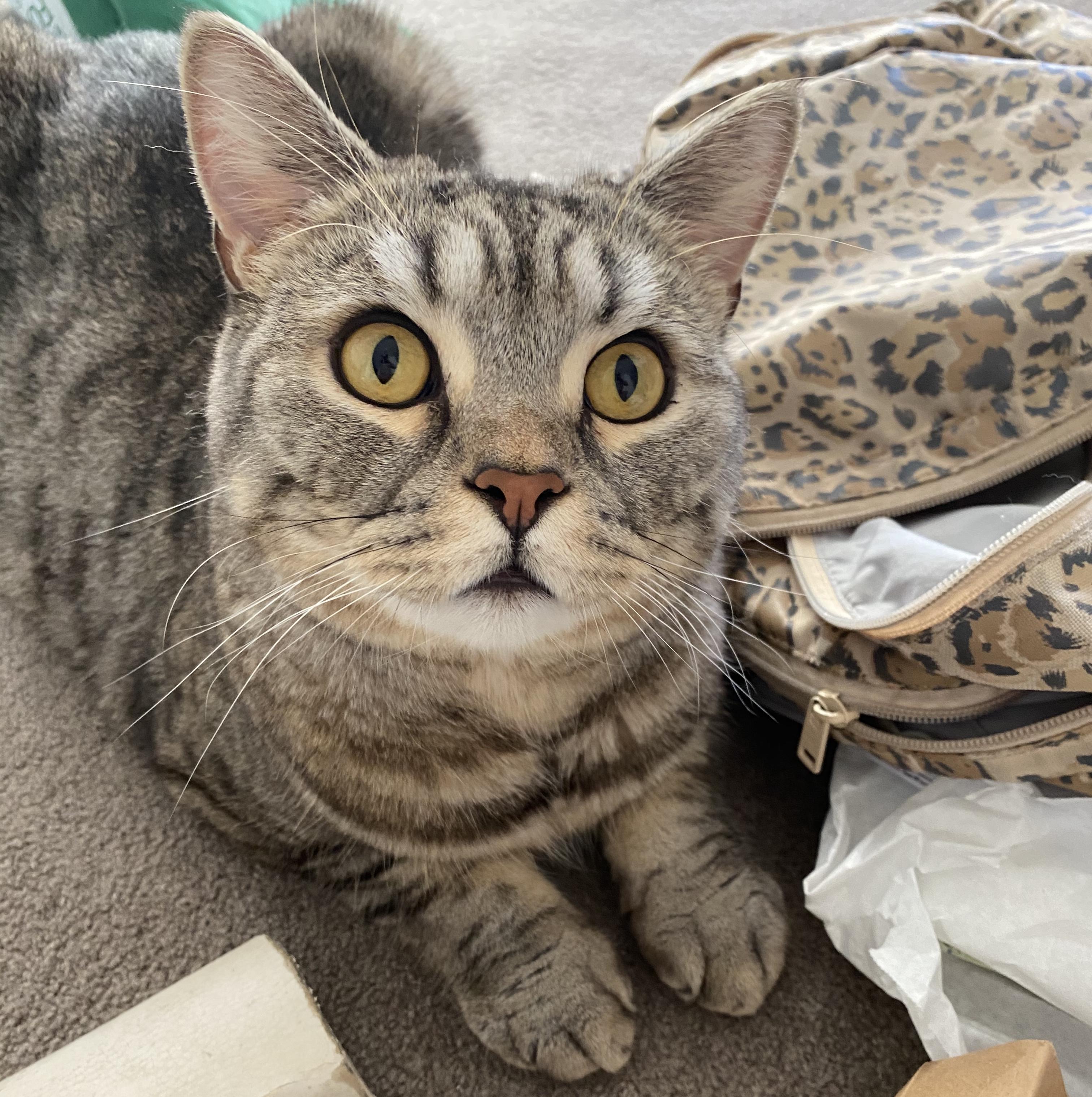 Kucing Pixel