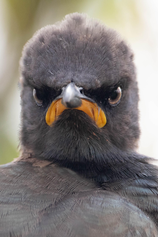 Burung dengan tampang bete